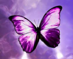 butterfly - purple